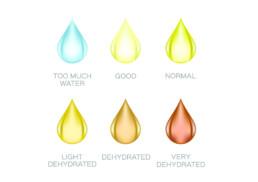 Urinfarbe ist Indikator für Flüssigkeitsmenge