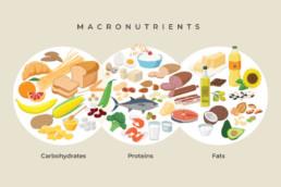 Infografik Makronährstoffe